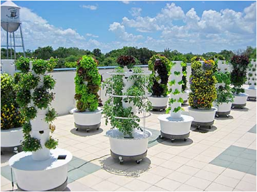 Tower-Garden-by-Juice-Plus+.png.opt369x276o00s369x276