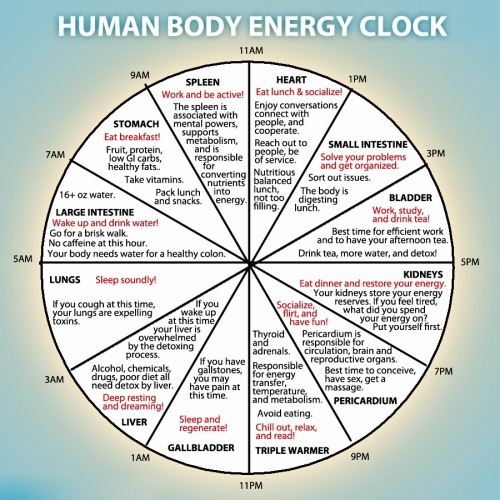 human-body-energy-clock (1)